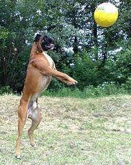Совершенствование нижних передач в волейболе